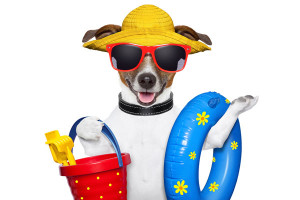 dog in sunglassess & beach toys